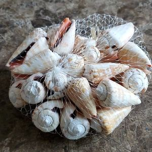 None Accents - Sea Shells